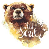 Watercolor bear with handwritten words Wild Soul. Forest animal. Wildlife art illustration. Can be printed on T-shirts. Bags, posters, invitations, cards stock illustration