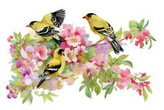 Watercolor beautiful birds sitting on blooming branches.