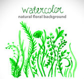 Watercolor beautiful green background Stock Photography
