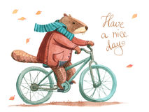 Watercolor beaver in coat and scarf riding a bicycle Royalty Free Stock Photos