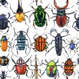 Watercolor beetles seamless pattern. Bugs hand drawn illustration stock illustration