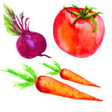 Watercolor beetroot, tomato, carrot vector illustration