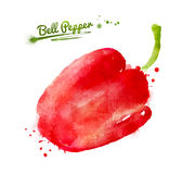 Watercolor bell pepper. Watercolor hand drawn illustration of bell pepper with paint splashes Royalty Free Stock Image
