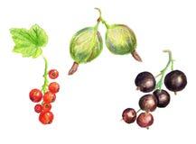 Watercolor berries stock photos