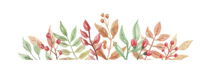 Watercolor Berries Frame Header Autumn Fall Leaves Flowers Leaf Stock Image