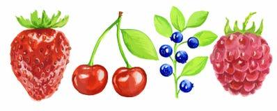 Watercolor berries set. Stock Image