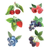 Watercolor Berry Set. With cherry raspberry strawberry isolated vector illustration royalty free illustration