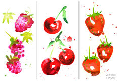 Watercolor berry set. Vector isolated berry set - raspberry, cherry and strawberry. Drawn by watercolor vector illustration