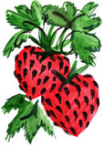 Watercolor berry strawberry impression painting. In white background Stock Illustration