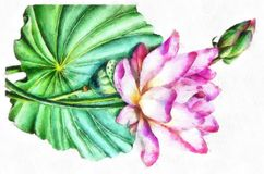 Watercolor Big Leaves And Bud For Pink Lotus Painting Exotic And Tender Hand Painting Flower Stock Photos