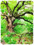 Watercolor of a big tree in a green forest. A digital watercolor of a big tree in a green forest royalty free illustration
