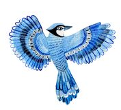Watercolor bird blue jay flying hand drawn Illustration isolated on white background. Hand painted bluejay.