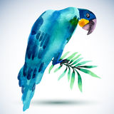 Watercolor bird. Blue parrot isolated on white background. Royalty Free Stock Image
