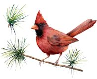 Watercolor bird cardinal. Hand painted greeting card illustration with red bird and branch isolated on white background stock illustration