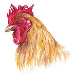 Watercolor bird cock rooster chinese horoscope 2017 new year  Royalty Free Stock Image