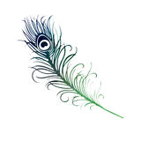Watercolor Bird Feather blue green purple illustration. A watercolor bird feather, blue, green, purple illustation Royalty Free Stock Images