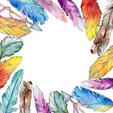 Watercolor bird feather frame from wing. Royalty Free Stock Photos