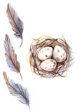 Watercolor bird feather quail nest egg set isolated.  Stock Images