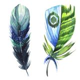 Watercolor bird feather from wing isolated. Royalty Free Stock Photography