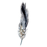 Watercolor bird feather from wing isolated. Royalty Free Stock Image