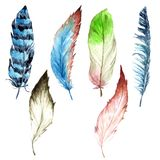 Watercolor bird feather from wing isolated. stock photo