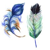 Watercolor bird feather from wing isolated. Royalty Free Stock Photos