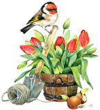Watercolor Bird and Garden flowers background. Stock Photo