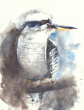 Watercolor bird kingfisher kookaburra illustration painting handmade Royalty Free Stock Images
