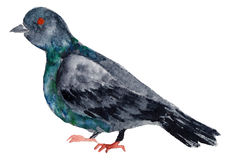Watercolor bird. Stock Photo