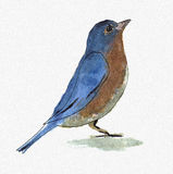 Watercolor Bird. Small blue bird, pained by watercolors Stock Images