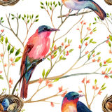 Watercolor birds on the blossoming trees Stock Images