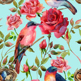 Watercolor birds on the pink and red roses Stock Photos
