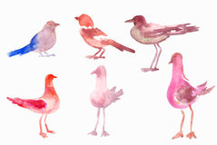 Watercolor birds Stock Photos