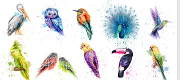 Watercolor birds set Vector. Peacock, owl, pelican, parrot, humming birds collections royalty free stock photography