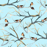 Watercolor birds on the tree branches Stock Images