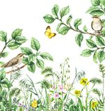 Watercolor Birds and Wildflowers. Watercolor painting. Hand drawn illustration. Green meadow with songbirds and insects. Aquarelle collage made with forest birds stock illustration