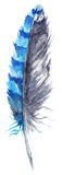 Watercolor black and blue jay feather vector isolated Stock Photos