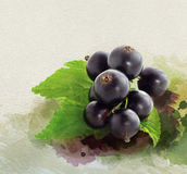 Watercolor black currant collage. Stock Photo