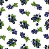 Watercolor black currants seamless pattern. Royalty Free Stock Photo
