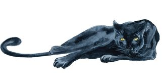 Watercolor Black Panther Wiledlife Illustration Stock Images