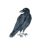 Watercolor black raven Stock Photos