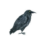 Watercolor black raven. Drawing bird, hand drawn illusration Royalty Free Stock Photography