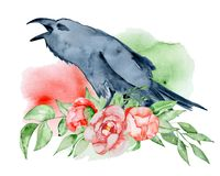 Watercolor black raven with floral peony bouquet Hand drawn crow with flowers. Illustration Royalty Free Stock Photos