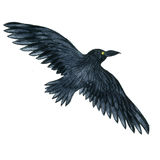 Watercolor black raven. Watercolor black flying raven, drawing bird, hand drawn illusration Stock Photography