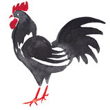 Watercolor black rooster Royalty Free Stock Photos