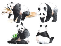 Watercolor black and white four pandas Stock Photos