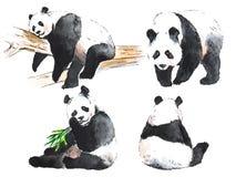 Watercolor black and white four pandas Stock Photos