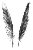 Watercolor black and white monochrome feather set isolated Stock Photos