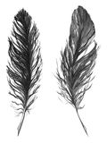 Watercolor black and white monochrome feather set isolated Royalty Free Stock Image