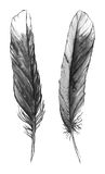 Watercolor black and white monochrome feather set isolated Royalty Free Stock Images